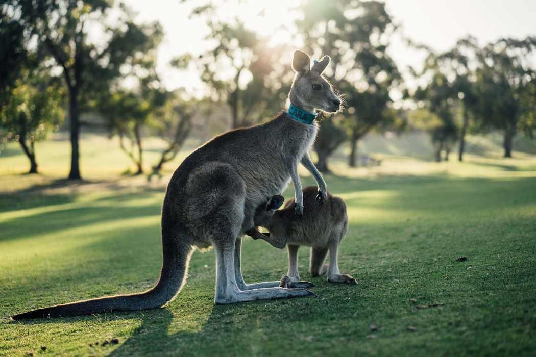Australie : Sydney, Melbourne ou Camberra ? Quelle destination choisir sans se ruiner ?